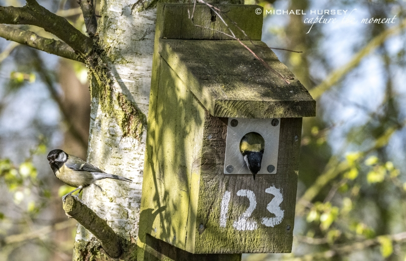 Tit in a Box - Little Paxton Reserve